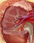 травма таза, мочеполовой системы