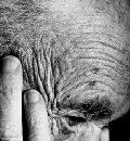эпидемиология травм у пожилых