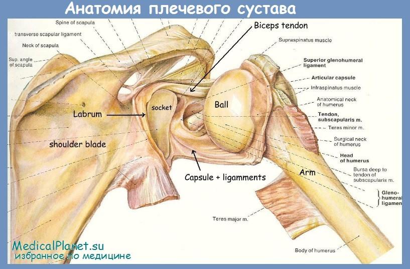 Застарелый вывих плечевого сустава видео операция питание при болезни суставов пальцев рук
