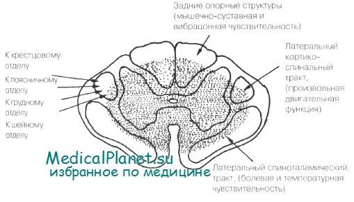 Центральный спинальный синдром