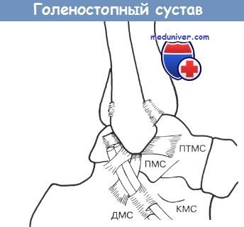 Изображение - Хроническая нестабильность голеностопного сустава sviazki_golenostopnogo_sustava