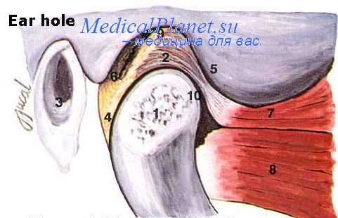 Фотография история болезни остеоартроз коленных суставов.