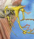 блокада черепных нервов
