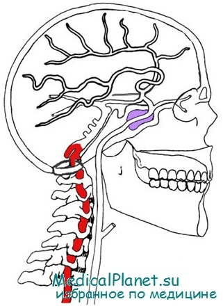 позвоночная артерия